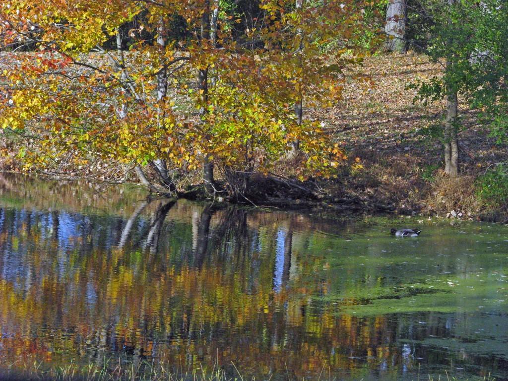 Steven bruce design the garrison fall wedding for Design duck pond