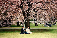 love couples under tree wallpaper
