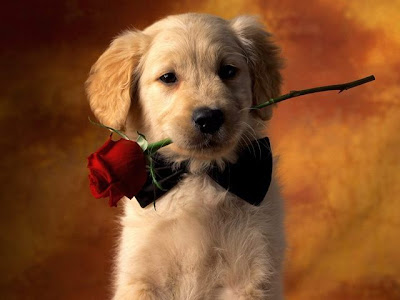 Cute Dog WAllpaper for valentine