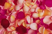 Colorful rose petal pattern wallpaper texture