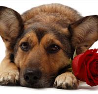 missing my valentine