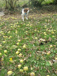 Ethel Mae helps with the walnut harvest