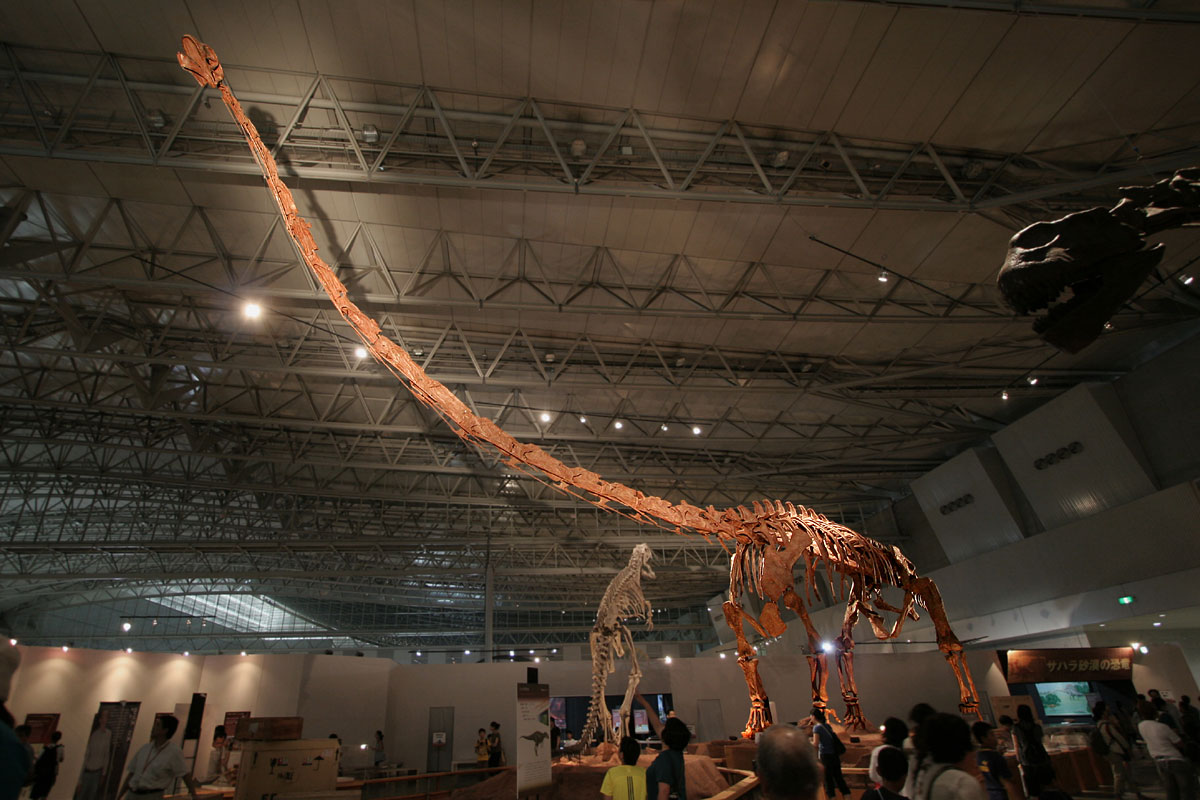 World S Largest Dinosaur Discovered In Argentina And It So Huge Doesn T Even Have A Name Yet