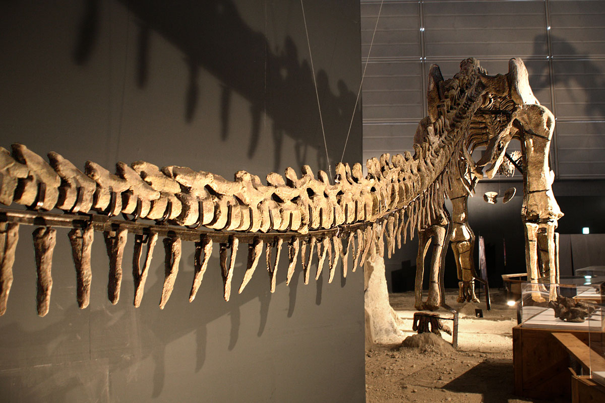 Sauroposeidon Skeleton