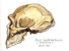 El Paleoantropólogo Despistado