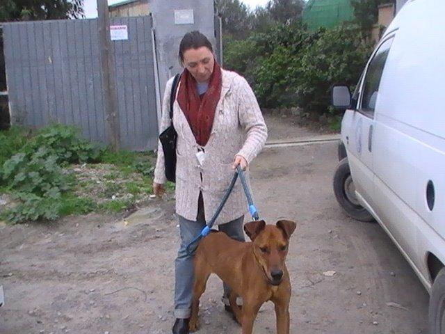 Adopción el 16/01/09 de Danko!