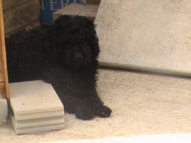 Nana,adoptada en Febrero 09!