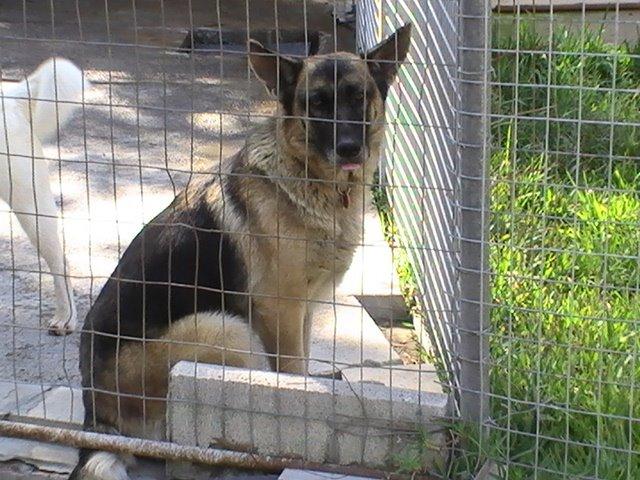 Palma,adoptada en marzo 2009!