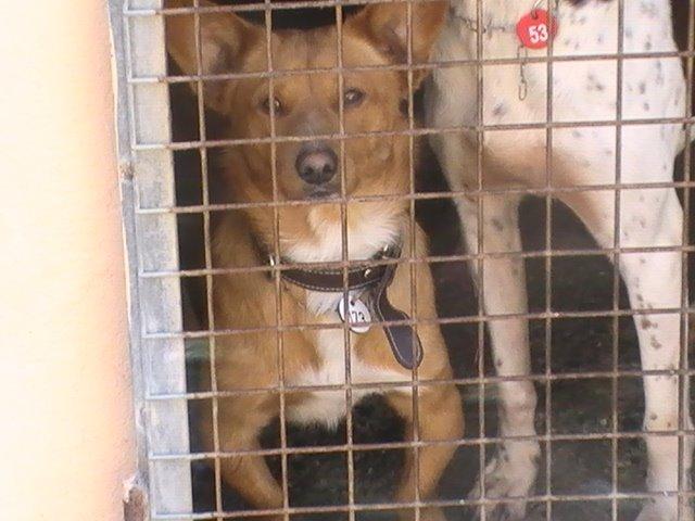 Braulio, adoptado en el extranjero!