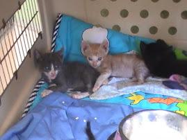 Alguno de nuestros gatitos en adopción.