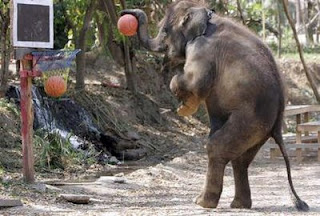 elephant plays Basketball