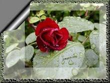 De un jardín especial