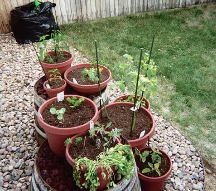 Pictures of herbs in containers how to plant a container for Container herb garden