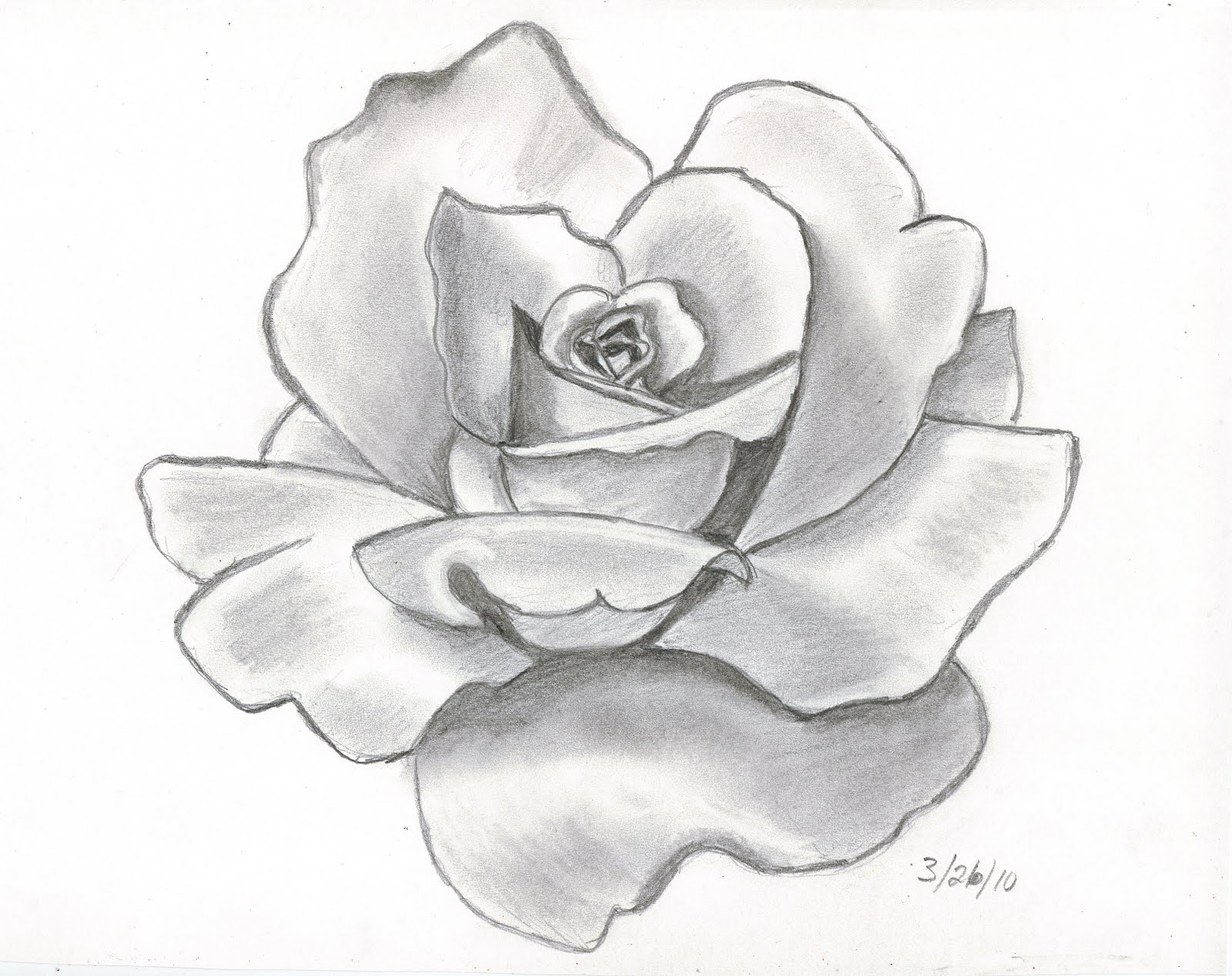 easy pencil drawing of roses