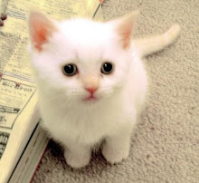 Cute Little White Kitty