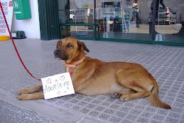 Para Adopção