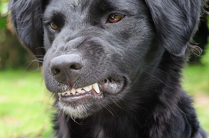 schwartzerwitz: does denying the bark mean the dog won't bite?
