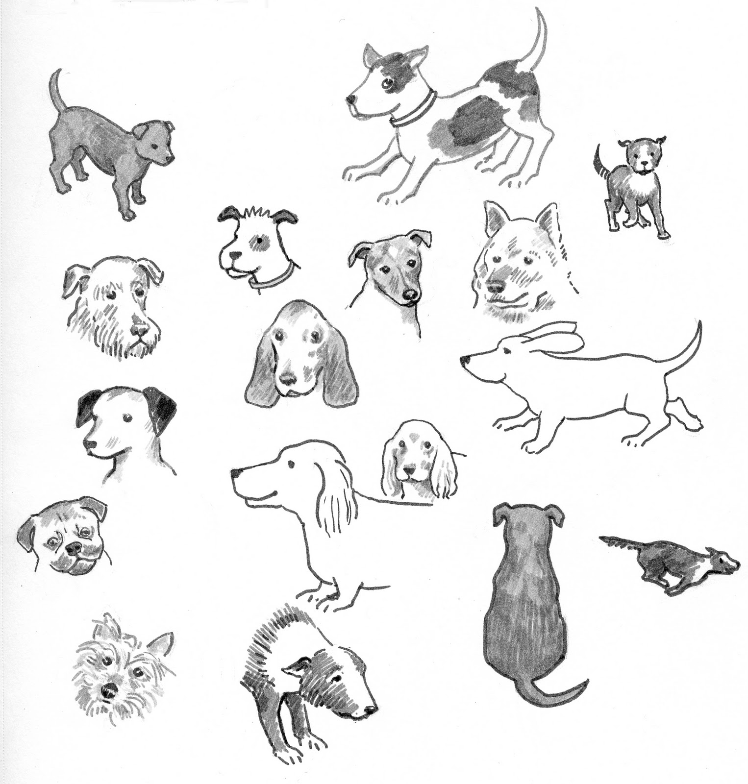 whenever i draw a dog from my imagination it ends up looking like a yellow lab why is this we had cocker spaniels and an irish setter when i was growing
