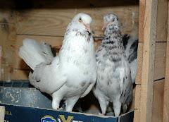 Kendi Kuş'larım.
