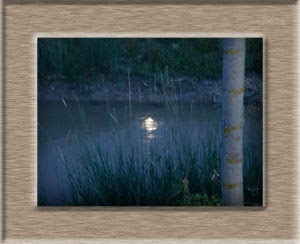 luna entre juncos