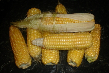 cornbunch