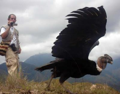 escultura animal chileno: