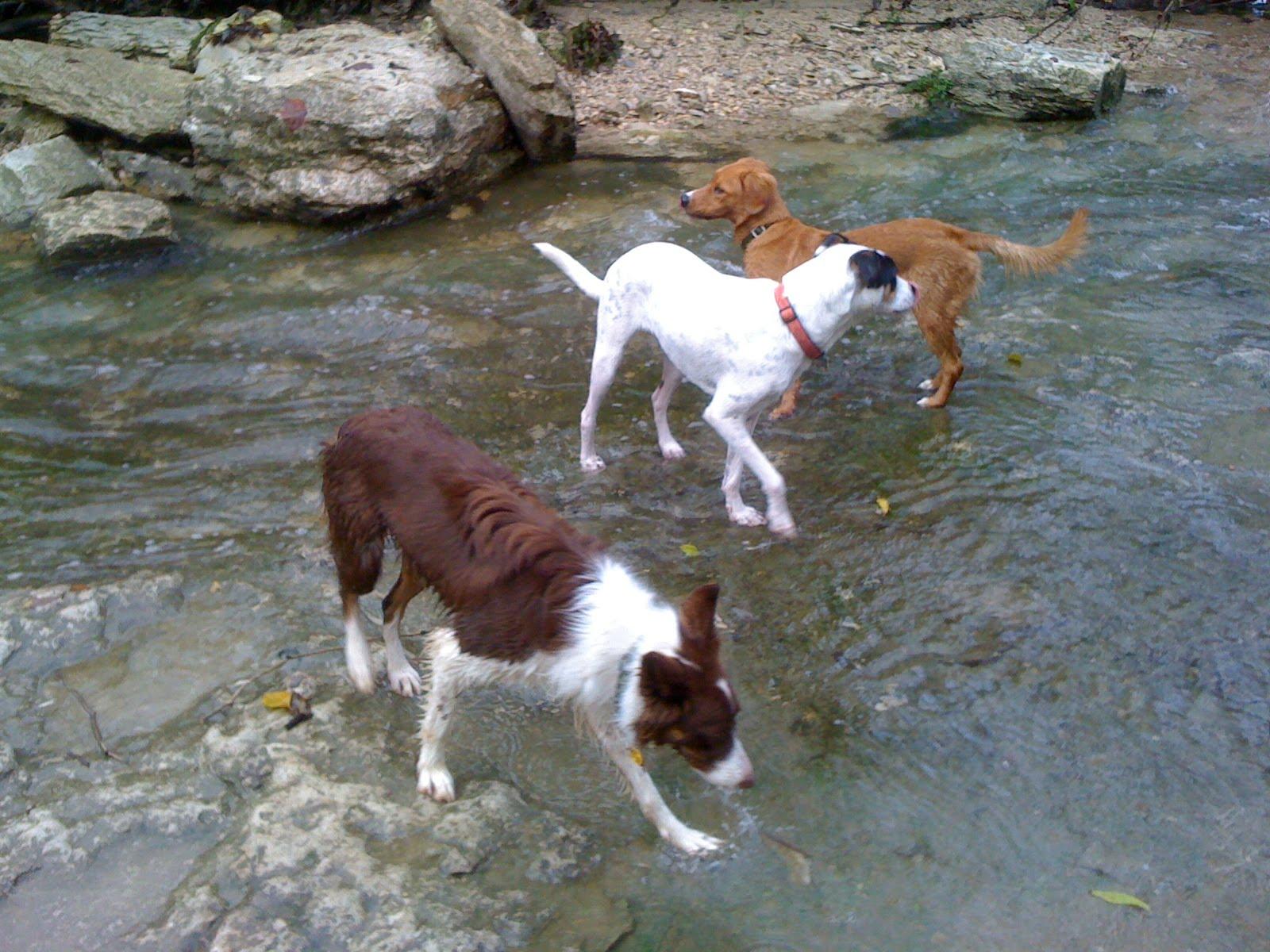 Little Dry Creek Dog Park