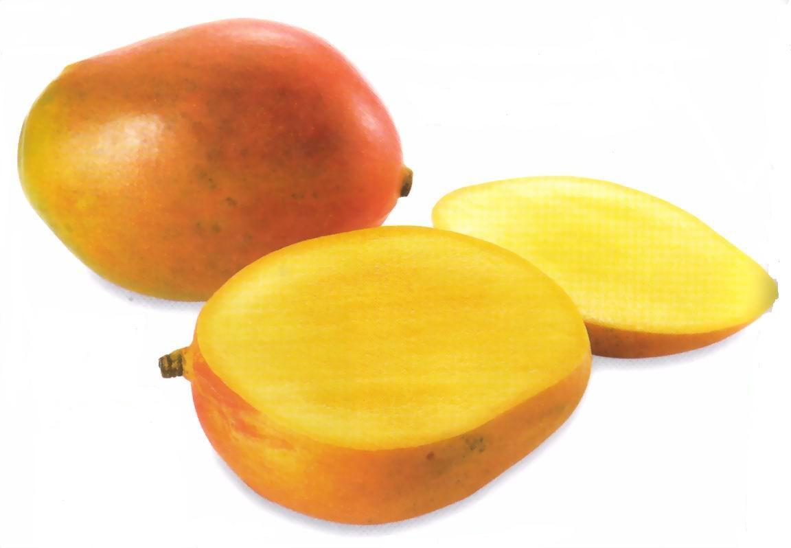 MANGO | PURNA TRAVELS