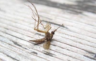 d co r seau travaux les gestes cologiques simples pour chasser les moustiques. Black Bedroom Furniture Sets. Home Design Ideas