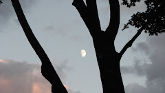 The moon in the trees.