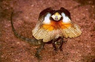 NALAR: Gambar Binatang Unik