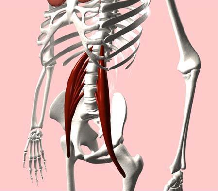Amor Pilates: Músculos que intervienen en el movimiento de la cadera