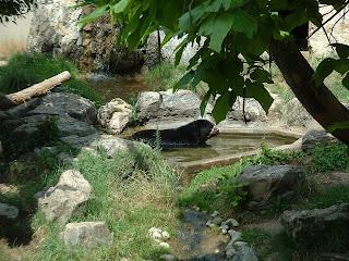 l'ours dans son bassoin