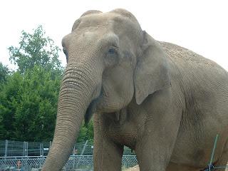 Un éléphant et sa trompe