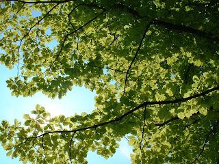 Sous le feuillage d'un arbre