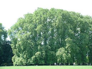 Les gigantesques arbres du parc permettent d'avoir une ombre bienvenue en éte