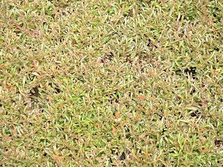 Plante à dominante vert-rouge