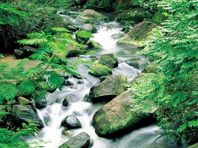 É nesse trilhar, de descida do rio, de vida em transformação, que gostaria de convidá-lo para um encontro