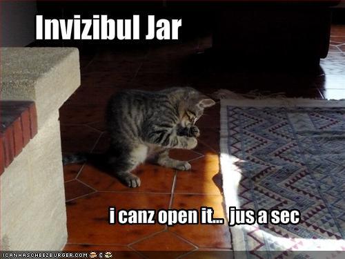 Basta Pobre Gatito Alguien Ganle Que Hay Frascos Invisibles