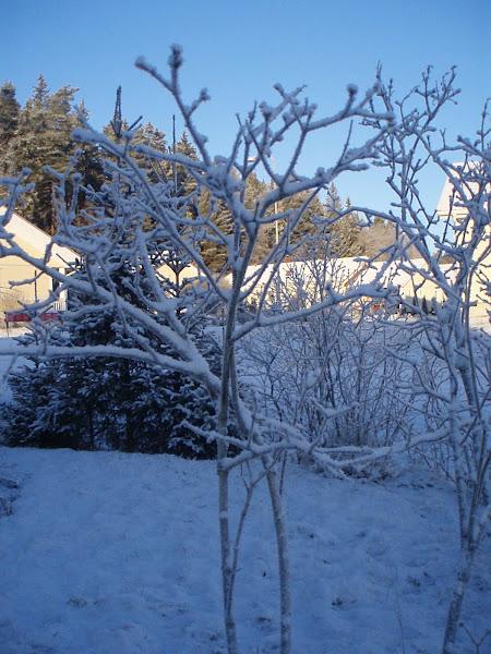 Talvi 4. tammikuuta 2009