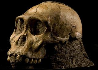 Novo ancestral do homem é anunciado na África do Sul