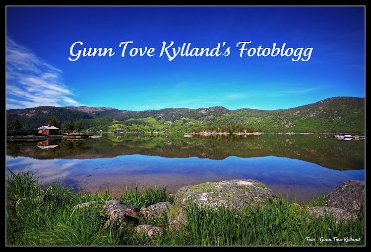Gunn Tove Kylland's FotoBlogg