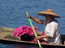 lotus para ofrendas  templo