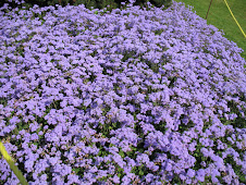 Purple flowers for Jamie