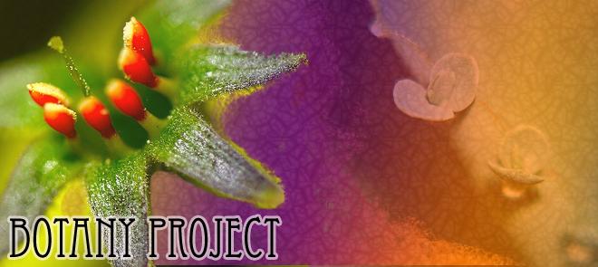 Botany Project
