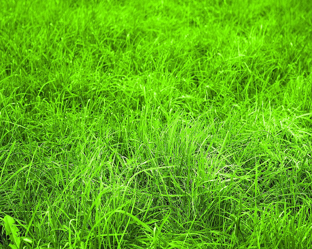 Nature Wallpaper Green Grass