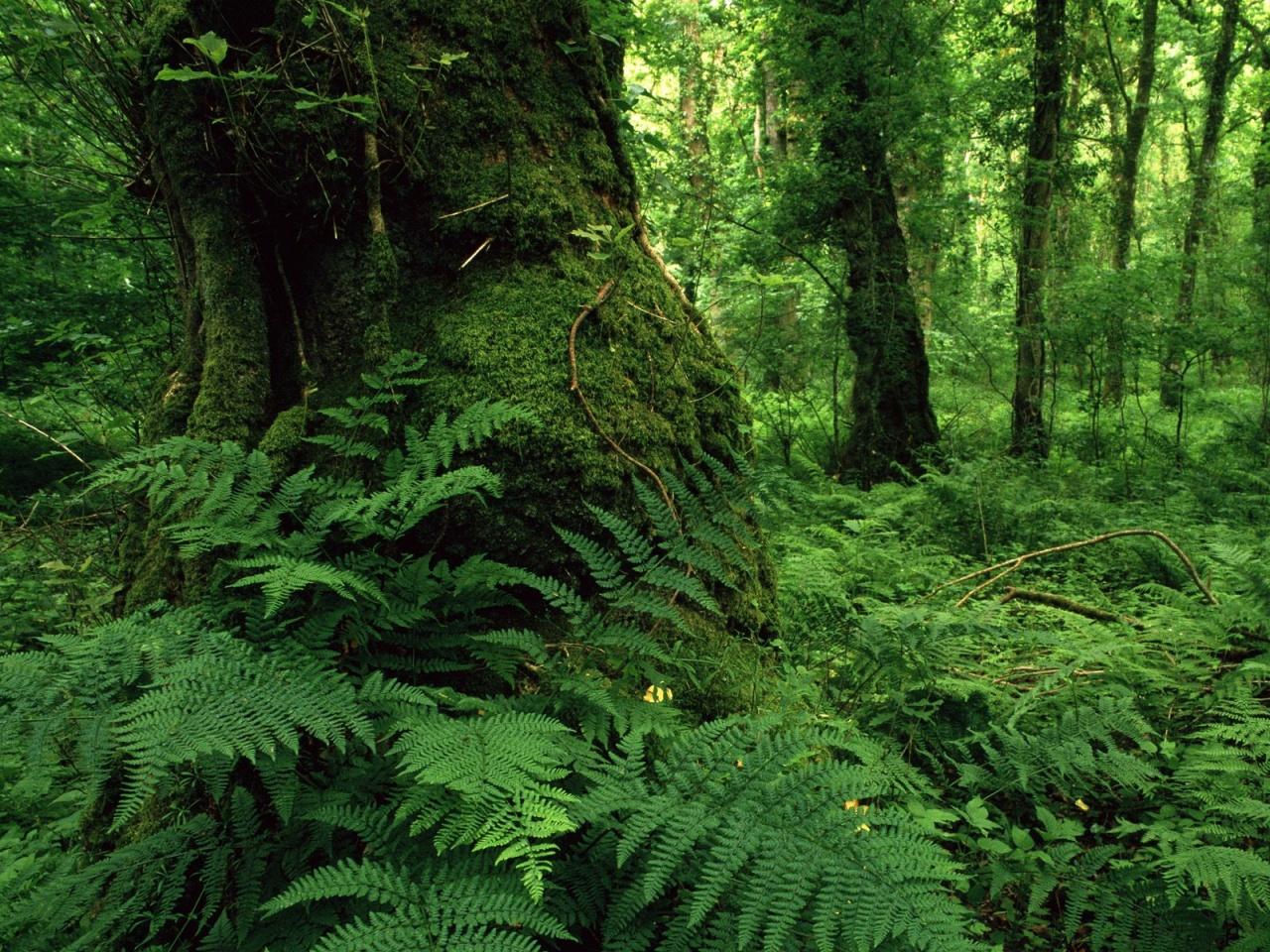 http://1.bp.blogspot.com/_uTGKd6u5pJ4/TSPlro9YWLI/AAAAAAAAAUc/ZZg43yfvXSc/s1600/Big-tree-Lough-key-forest-park-ireland-Nature-wallpaper-1280x960.jpg