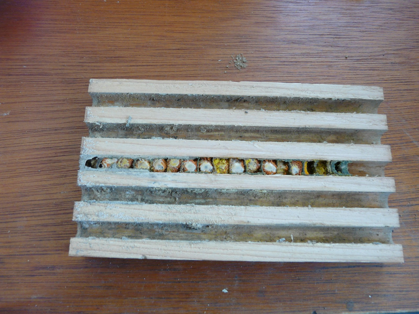 Summer Solitary Bees In A Wooden Nesting Tray