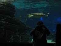 Me shooting myself in mirror, with shark tank behind