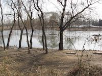 Milu Park wetlands, bird sanctuary